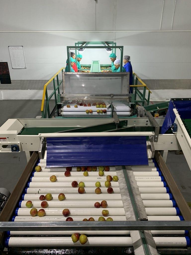 Banhoek Fruit Packers Packline